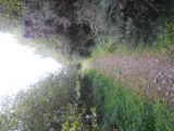 Photo of Glen of Aherlow Trail Ultra-Marathon