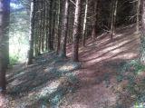 Photo of Tracton Woods
