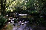 Photo of Ballyhoura Trail MARATHON (+ WMRA 40km Trial '21)